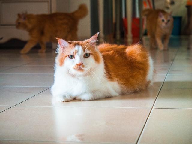 ขนมแมวเลีย ราคาถูก